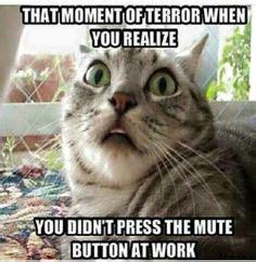 Name:  cat.jpeg Views: 987 Size:  16.4 KB