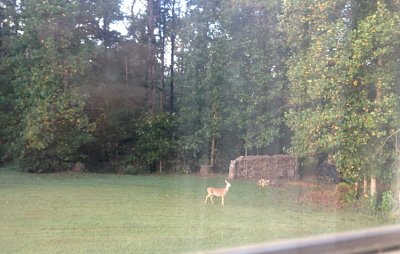 Click image for larger version  Name:deer.PNG Views:15 Size:1.47 MB ID:36639
