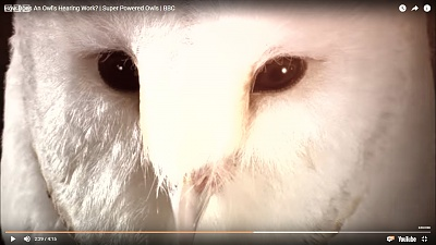 Click image for larger version  Name:barn owl1.jpg Views:42 Size:221.2 KB ID:39292