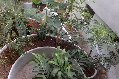 Click image for larger version  Name:garden.jpg Views:11 Size:275.0 KB ID:43915