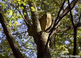 Name:  INBLOrocktree2_stoops.jpg Views: 29631 Size:  17.1 KB