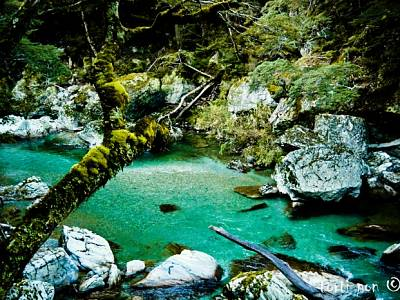 Click image for larger version  Name:Routeburn Track 300dpi.jpg Views:110 Size:208.3 KB ID:20791