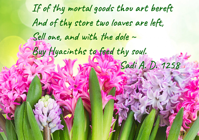 Click image for larger version  Name:hyacinths*.png Views:31 Size:409.7 KB ID:41685