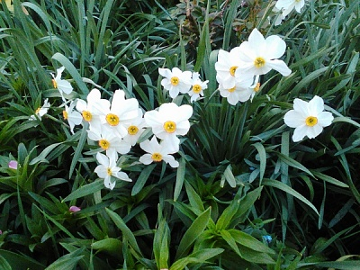 Click image for larger version  Name:flower.jpg Views:34 Size:232.3 KB ID:42437