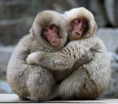 Click image for larger version  Name:cute-animal-hugging-pictures-020.jpg Views:9 Size:48.4 KB ID:44062