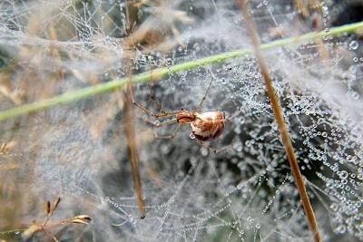 Click image for larger version  Name:Spider2_small_macro.jpg Views:128 Size:267.9 KB ID:22730