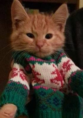 Click image for larger version  Name:xmas cat.jpg Views:129 Size:35.6 KB ID:27814
