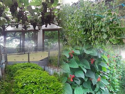 Click image for larger version  Name:vegetablegarden2.jpg Views:7 Size:147.6 KB ID:43766