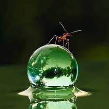 Name:  Ant 3.jpg Views: 133 Size:  6.6 KB