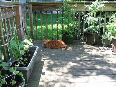 Click image for larger version  Name:my_porch_garden.jpg Views:265 Size:204.0 KB ID:11997