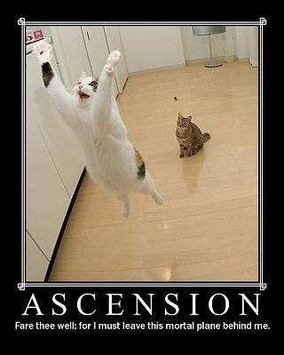 Click image for larger version  Name:Ascension cat..jpg Views:97 Size:69.5 KB ID:7907