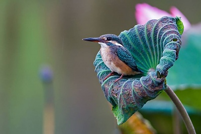 Click image for larger version  Name:14 ~ hummingbird on flower turquoise and teal (4-14-15) (2).jpg Views:3 Size:56.4 KB ID:46558
