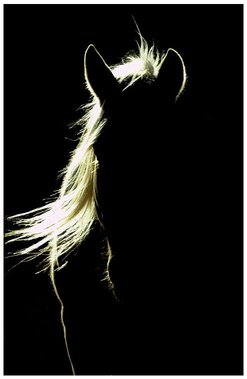 Name:  shadow horse.jpg