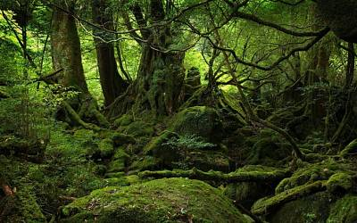 Click image for larger version  Name:Wild-forest-(Yakushima,-Japan).jpg Views:119 Size:199.6 KB ID:20424
