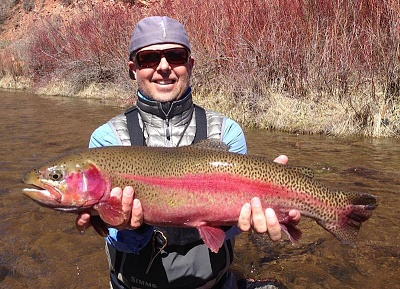 Click image for larger version  Name:Frying-Pan-River-Rainbow-Trout-2.jpg Views:63 Size:114.2 KB ID:40588