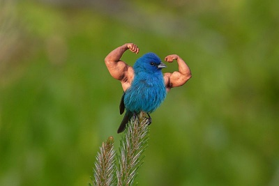 Click image for larger version  Name:bluebird human arms.jpg Views:37 Size:35.7 KB ID:36661