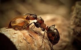 Name:  Ant 2.jpg Views: 186 Size:  7.1 KB
