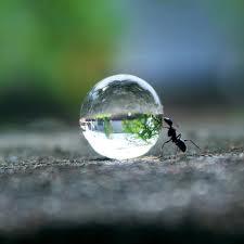 Name:  Ant 1.jpg Views: 186 Size:  5.2 KB