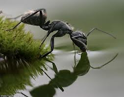Name:  Ant 4.jpg