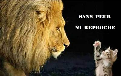 Click image for larger version  Name:lion_cat-2.jpg Views:189 Size:38.4 KB ID:7109