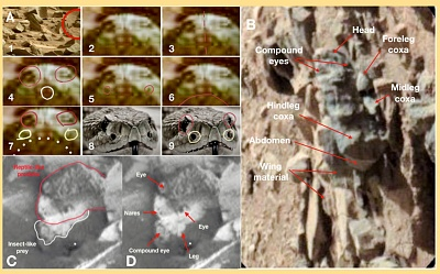 Click image for larger version  Name:Insect-on-Mars-02.jpg Views:50 Size:341.7 KB ID:42137