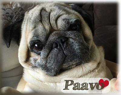 Click image for larger version  Name:Paavo.jpg Views:0 Size:123.0 KB ID:42566