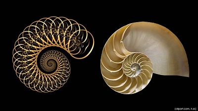 Click image for larger version  Name:fractals in nature.jpg Views:31 Size:69.6 KB ID:43224