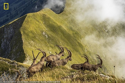 Click image for larger version  Name:national geo.JPG Views:23 Size:169.1 KB ID:40806