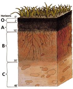 Name:  Soil_profile.jpg Views: 273 Size:  38.8 KB