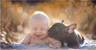 Click image for larger version  Name:BabyBullDog13Aout2015.PNG Views:146 Size:772.2 KB ID:30775