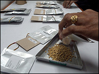 Seeds destined for the 'doomsday' vault (Image: IITA)